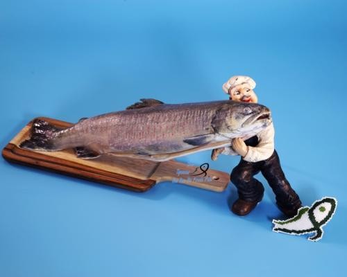 紅點鮭魚 Arctic Char